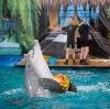Дельфинарии, океанариумы в Сходне