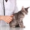 Ветеринарные клиники в Сходне